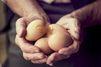 L'œuf reprend sa liberté