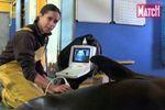 Echographie d'une otarie au zoo d'Amnéville