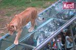 Thoiry : un safari au parc