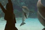 Le dauphin qui aimait la gymnastique