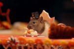 Le mini-repas de Thanksgiving pour des hamsters