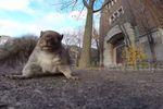 Quand un écureuil vole une GoPro