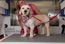 Le toilettage qui change la vie d'un chien des rues