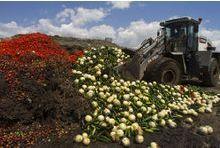 Gaspillage alimentaire : la lutte s'organise