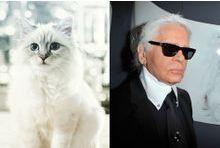 Choupette Lagerfeld riche à millions