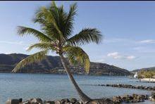 Fête sanglante en Martinique