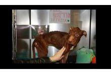 Patrick, emblème de la maltraitance animale
