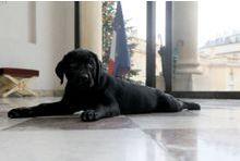 Philae, un chien à l'Elysée