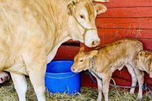 Mobilisation contre la ferme des 1000 veaux