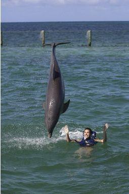 Danse avec les dauphins