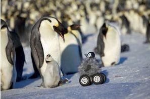 Même les animaux ont leurs robots!