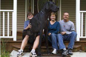 Zeus, le plus grand chien du monde, est mort