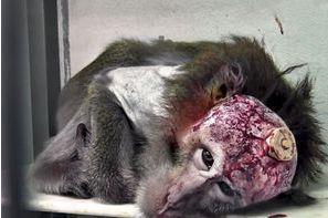 Expérimentation animale, une barbarie injustifiée