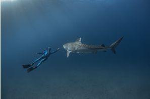 L'homme qui murmurait à l'oreille des requins