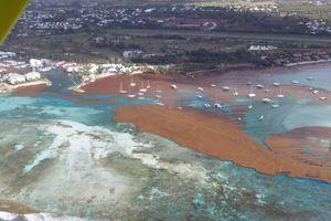 Vue aérienne sur l'île de la Guadeloupe où l'on voit de grosses tâches brunes sur l'eau. Ce sont des sargasses.