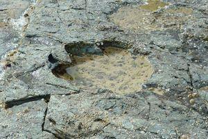 Une empreinte de sauropode, vue sur l'île de Skye.
