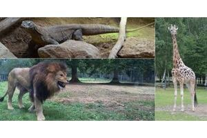 Les zoos de france actualit s photos vid os for Parc sauvage yvelines