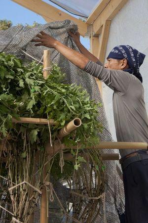 Le savoir-faire des horticulteurs japonais est nécessaire.