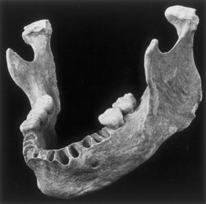 La mâchoire du jeune homme de 40 000 ans découverte en 2002.