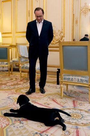 François Hollande et Philae, le petit labrador.