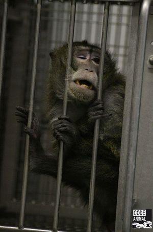 L'association Code Animal publie ce matin des photos prises dans le Fort en 2011.