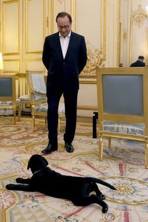François Hollande et la chienne Philae