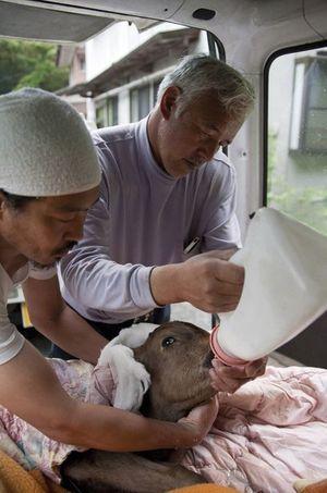 Naoto a transformé sa rizière en arche de Noé. Animaux qu'il ne peut ni vendre ni consommer.