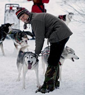 Sigi Schwarz attelle ses huskies, taillés pour courir 100 kilomètres par jour.