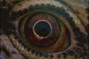 """Voyage of Time"" de Terrence Malick"