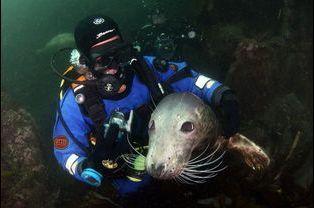 Ben Burville, proche des phoques qu'il croise au large des îles Farne