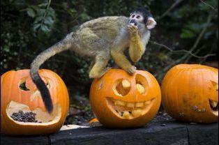 Les animaux déguisés pour Halloween