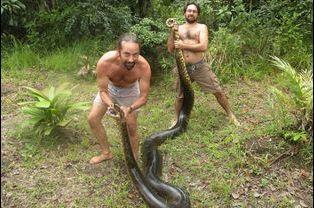 Un anaconda de 5 mètres a été attrapé puis relâché en Guyane
