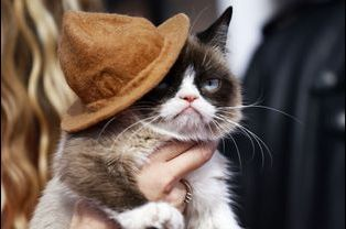 La star d'Internet, le fameux Grumpy Cat