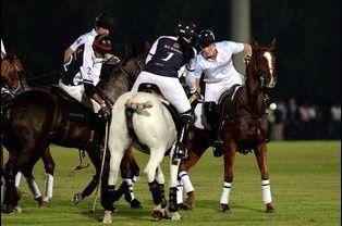 Le prince Harry participe à la Coupe de polo Sentebale à Abou Dhabi, le 20 novembre 2014