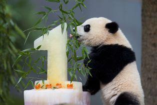 Premier anniversaire pour Bao Bao