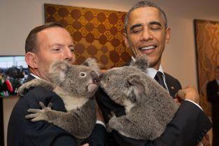 Jimbelung, le koala qui fait fondre les chefs d'Etat
