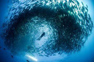 Au coeur de la tornade de poissons