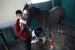 Aux petits soins pour les chevaux de course