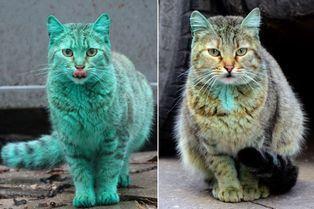 Le chat plus si vert de Varna