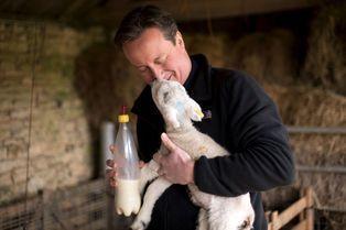 Les politiques et les animaux