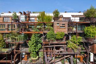 Une véritable jungle urbaine