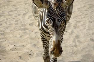 Découvrez le Zoo de La Palmyre