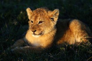 Dans la réserve du Masai Mara avec Goran Tomasevic