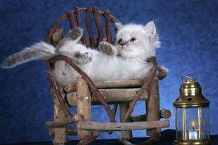 Les chatons prennent la pose