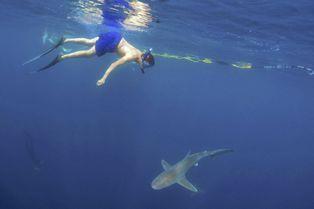 Nager avec les requins