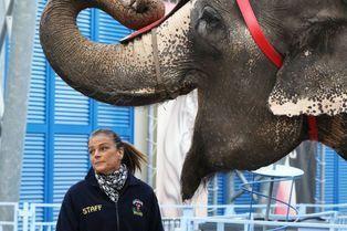 Stéphanie retrouve ses amis les éléphants