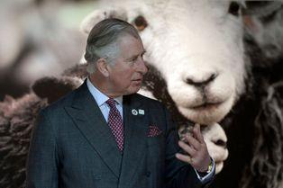 Le prince de Galles sous le signe du mouton