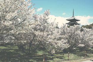 Découvrez Kyoto, la plus belle ville du monde
