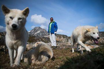 Pourquoi les chiens de traineaux sont menacés au Groenland