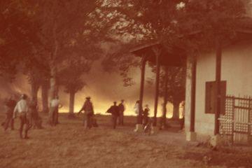 Dans les archives de Match - Au coeur du terrible incendie des Landes de 1949